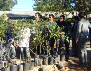 Municipio y escuelas plantaron 32 árboles entre jacarandá y lapachos