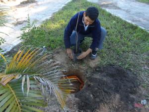 Alumno del Colegio  Pedro Leconte plantando  y apadrinando un árbol en Santa Ana